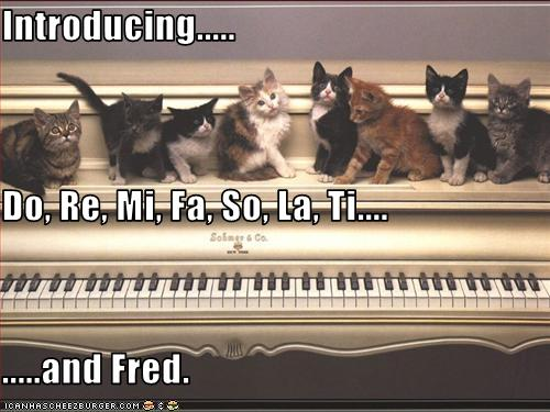 lolcats-fred